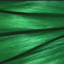 Emerald Green Silk Abaca
